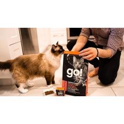 Kuidas toita pirtsakat kassi