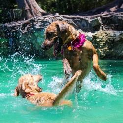 Koerad & kuumad ilmad