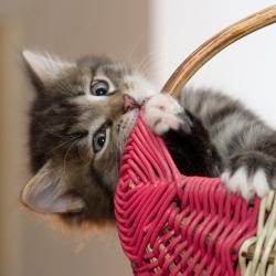 Näpunäiteid esmakordsele kassipoja omanikule