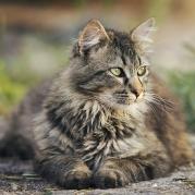 Lühidalt ülekaalulise koera/kassi toitmisest