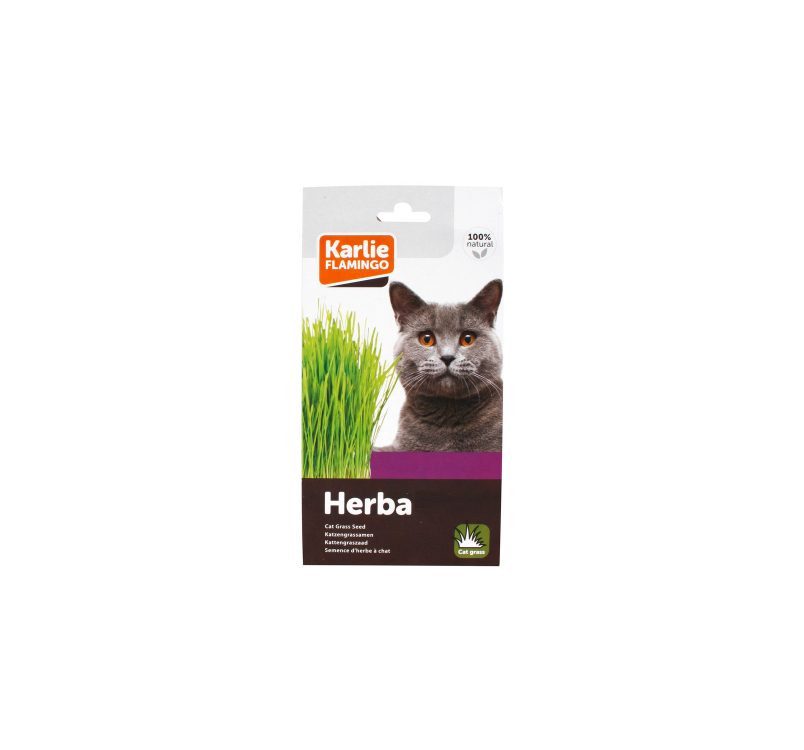 Cat Grass Seeds Soft