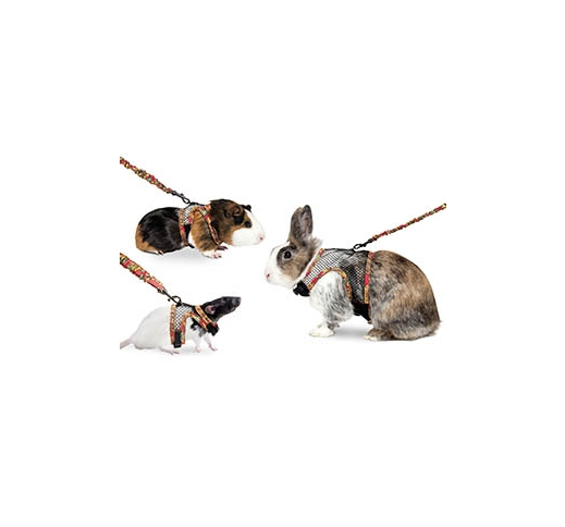 Chest Harness and Lead for Ferret or Guinnea Pig